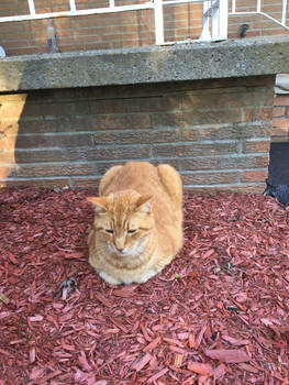 Cat as a lawn decoration