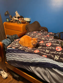 Loafing on my bed