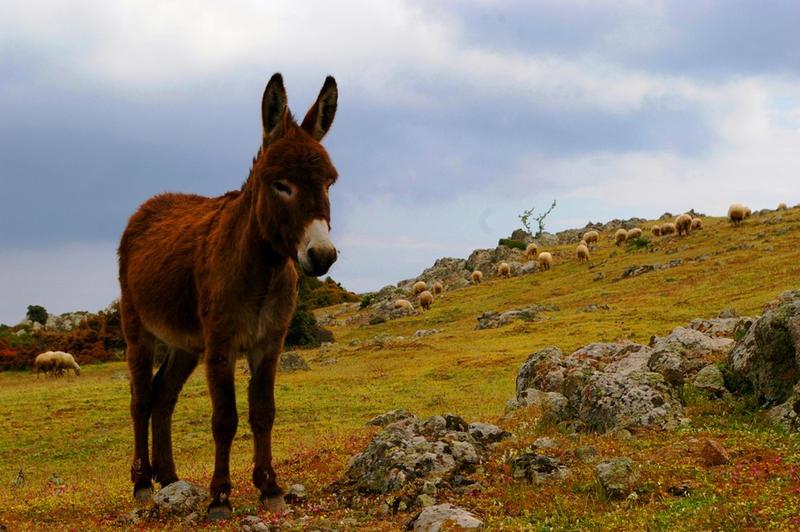donkey_by_ufukozer.jpg