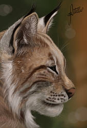 Lynx by Elvann