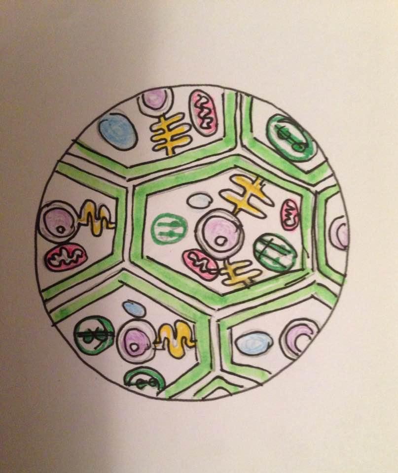 Plant Cell Mandala by Boishakhee