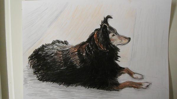 Drawing of my Grandmas dog by adderx99