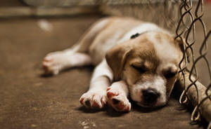 Sleeping Innocence by matthewfoxxphotos