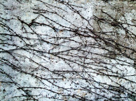Vine Texture 02 by dknucklesstock