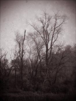 Woodland Texture 09
