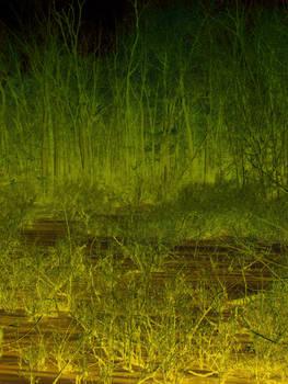 Swamp Texture 01
