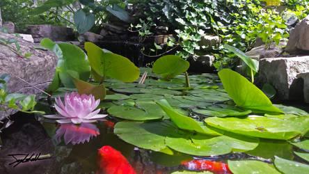 Hidden Water Lilly