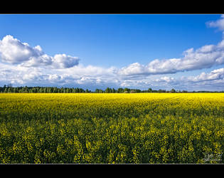 Spring 2011 by Riffo