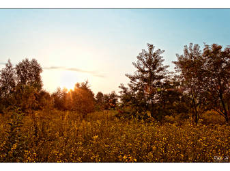 Late Summer 3 by Riffo
