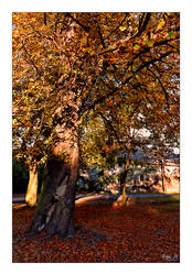 Autumn 2011 pt.2 by Riffo
