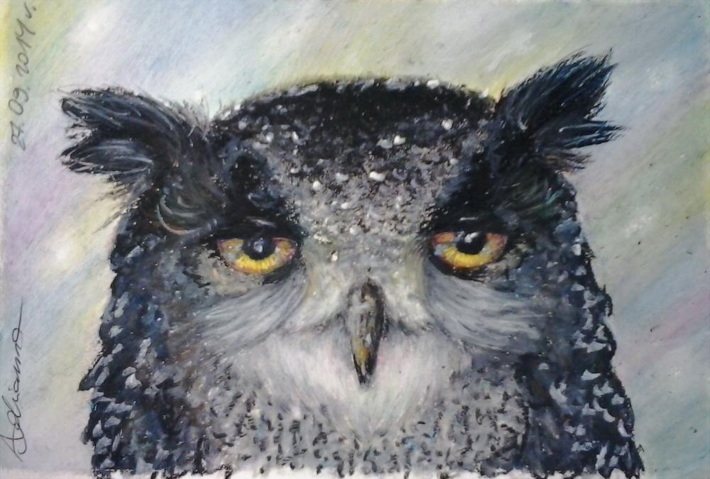 2014 09 27 Owl by Ada93