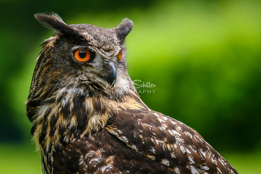Aninimal Book: Eurasian Eagle-Owl by spike83 on DeviantArt