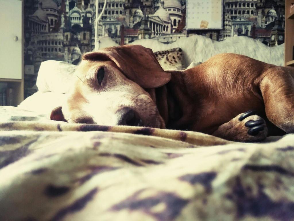 Dog's morning by Polina-PG