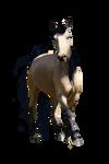 Buckskin Welsh Pony Pre-cut