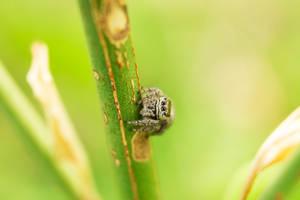 little spider by Sanka77