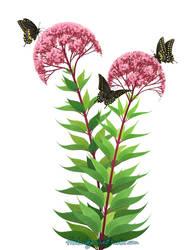 Black Swallowtails by RachelRaven
