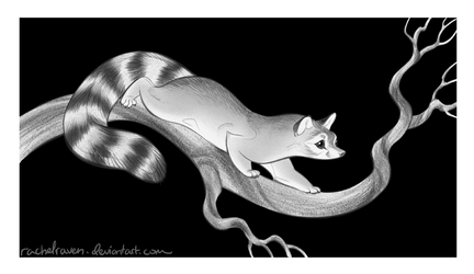 Ringtail by RachelRaven