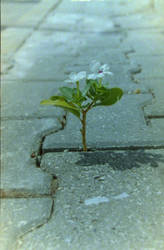 Miracle in concrete floor by Mcreation4102