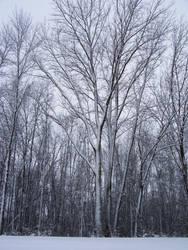 Winter Wonderland -- Center by rpg-chick