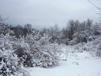 Winter Wonderland -- Woodery by rpg-chick