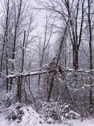 Winter Wonderland -- Touchdown by rpg-chick