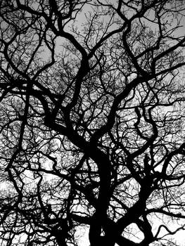 In-between the branches