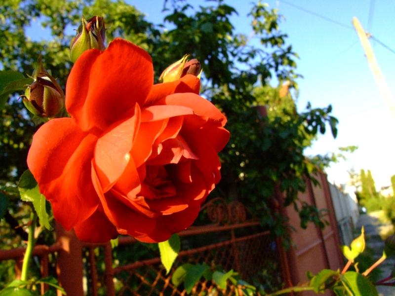 flower5 by cpbara