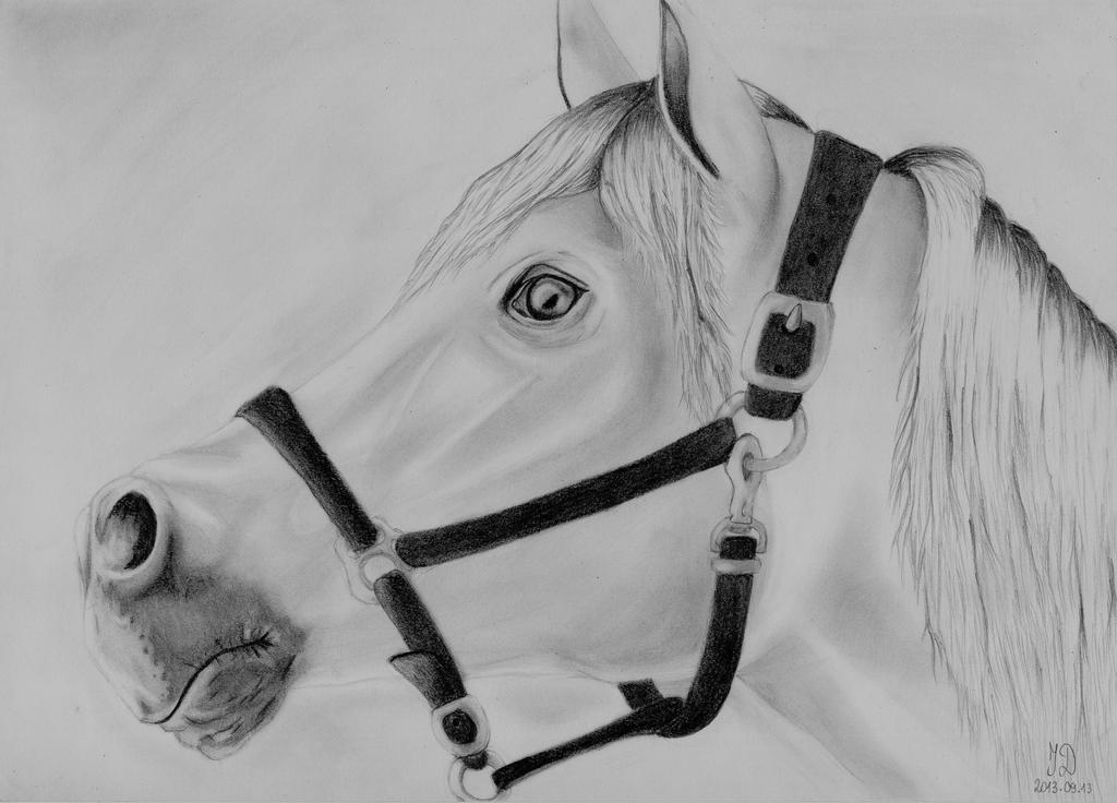 Horse by ieva111