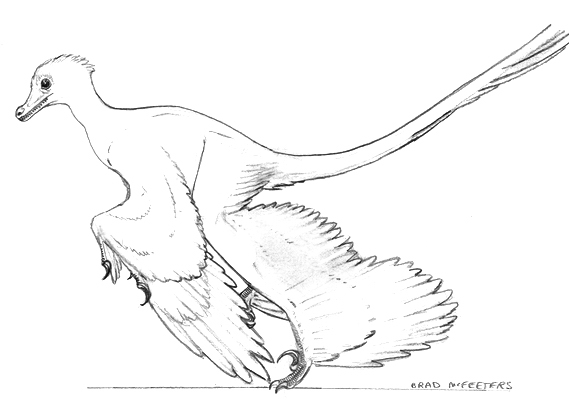 microraptor coloring pages - photo#32