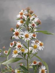 Riverbank flower by mossagateturtle