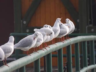 Chilling seagulls 2 by mossagateturtle