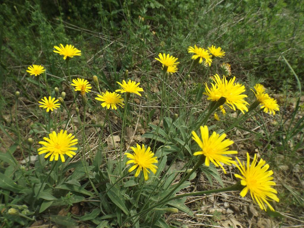 My Birthday Flowers 2 By Mossagateturtle On Deviantart