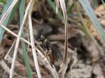 Pine sawfly by mossagateturtle