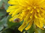 Yellow on yellow by mossagateturtle