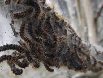 Caterpillar Gang by mossagateturtle