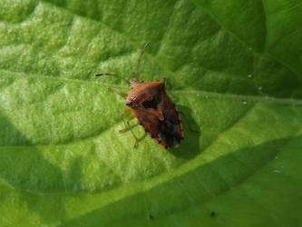 Parent bug by mossagateturtle