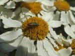 Jewel on a flower by mossagateturtle