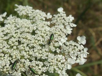 Little beetles like emerald by mossagateturtle
