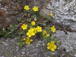 Valiant flowers by mossagateturtle
