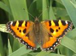 Butterfly like fire