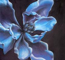 Blue Magnolia by ttf98