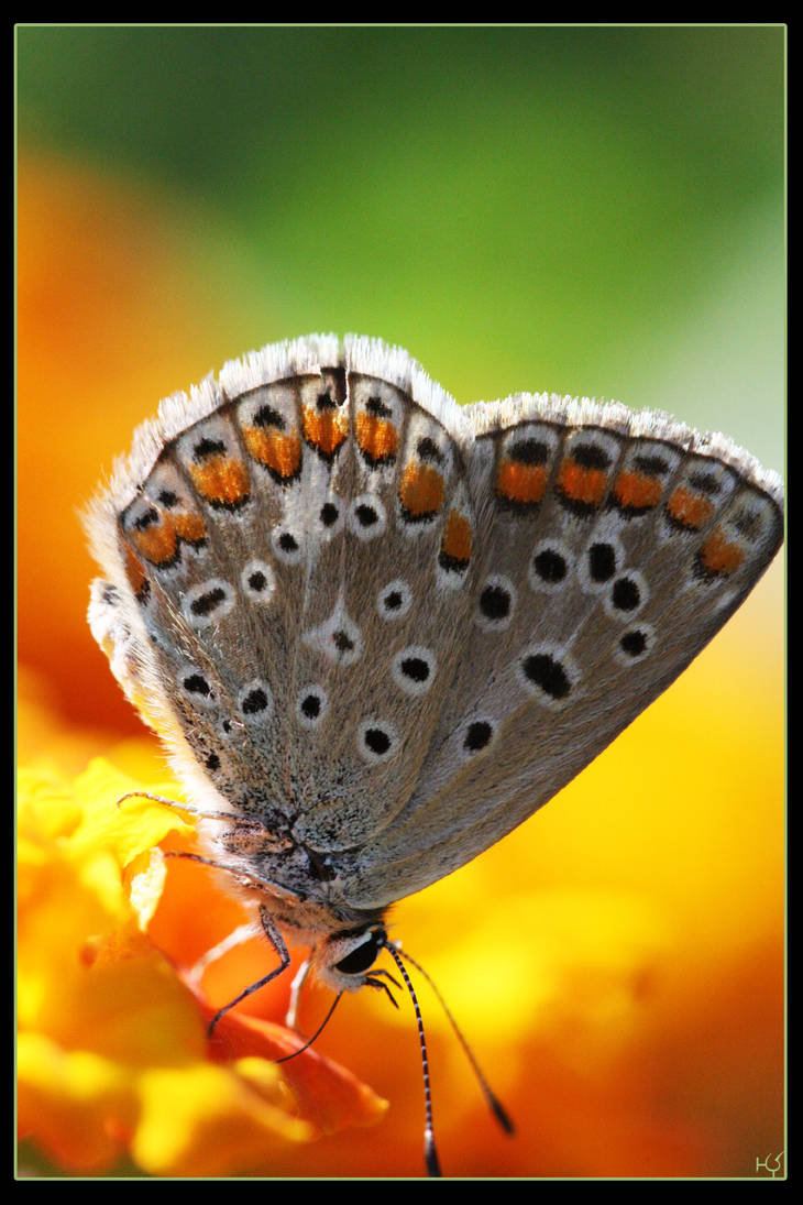Butterfly 3 by Globaludodesign