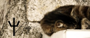 aelitys's Profile Picture
