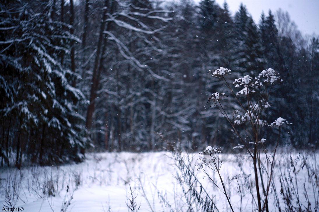 Snow by VAMPIdor