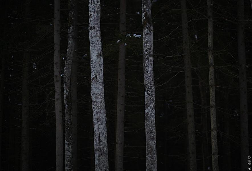 dark forest by VAMPIdor