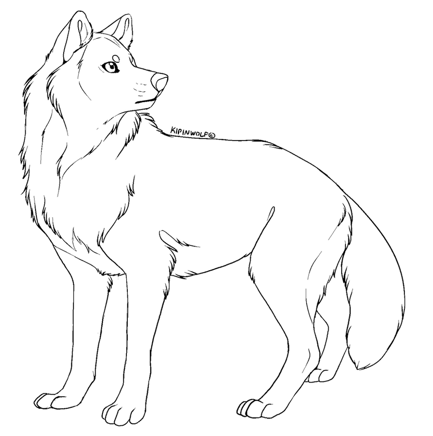 Wolf Lineart : Free lineart wolf by kipine on deviantart