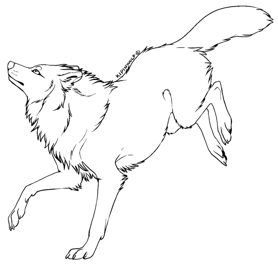 Lineart Wolf Tattoo : Wolf drawing references on pinterest sketch wolves