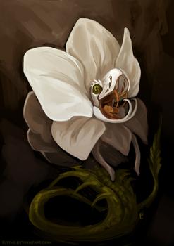 Orchid Viper