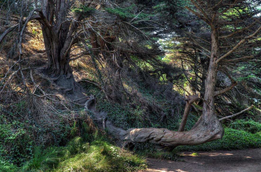 Aging Cypress 2 by PaulWeber