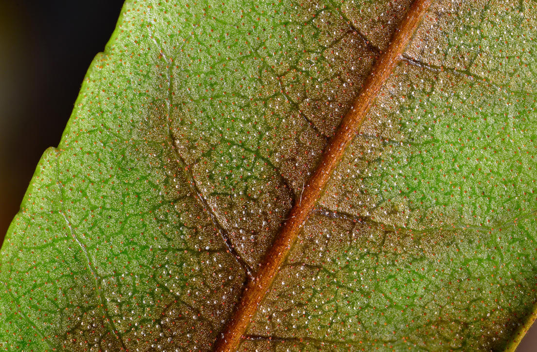 World of a Leaf by PaulWeber
